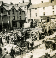 Cattle Fair In The Square Killorglin