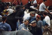 Horse Fair at Puck.